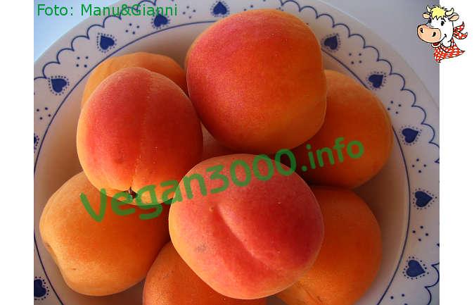 Foto numero 1 della ricetta Apricot sorbet