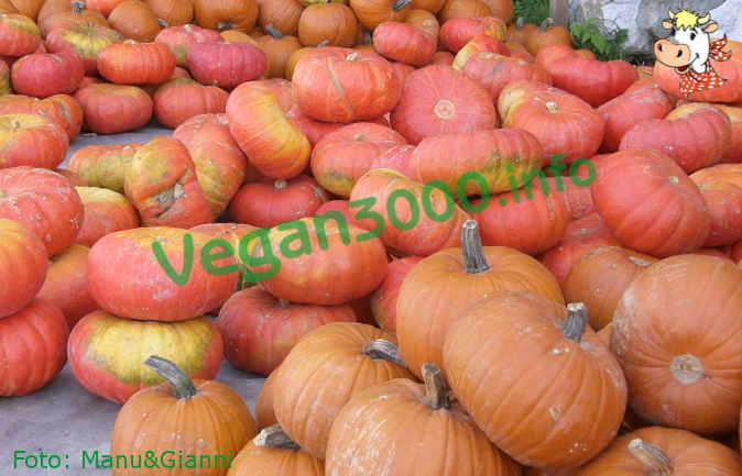 Foto numero 1 della ricetta Pumpkin pie
