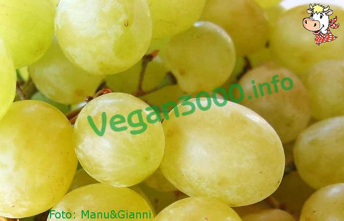 Foto numero 1 della ricetta Arrosto di seitan all'uva