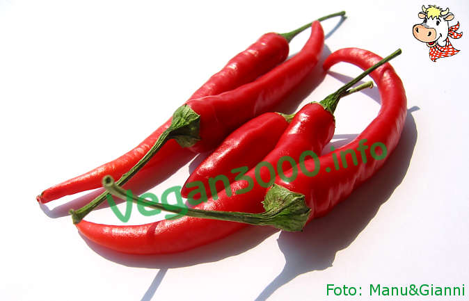 Foto numero 1 della ricetta Spicy sauce