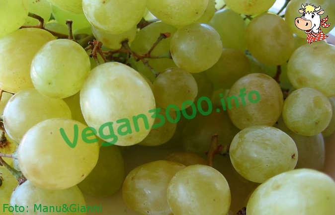 Foto numero 1 della ricetta Schiacciata con l'uva