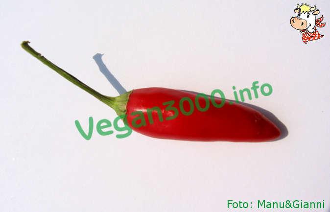 Foto numero 1 della ricetta Aceto aromatizzato al peperoncino