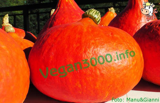 Foto numero 1 della ricetta Pasta with pumpkin