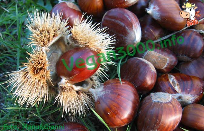 Foto numero 1 della ricetta Verze ripiene e castagne