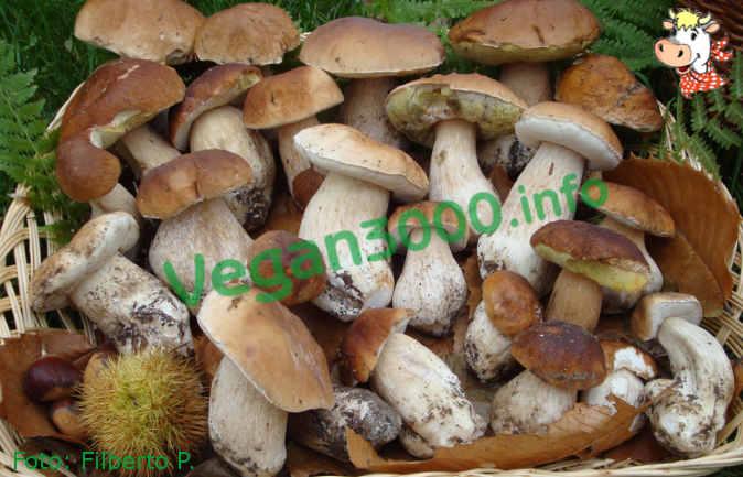 Foto numero 1 della ricetta Funghi porcini al gratin