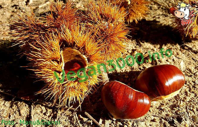 Foto numero 1 della ricetta Risotto with chestnuts